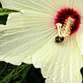 Pollinator by Judy Vincent