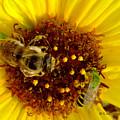 Pollinators Share Bloom by Kae Cheatham