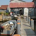 Pollys Dock 7 by Joyce StJames