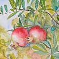 Pomegranates by Fidan Rustamli