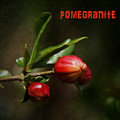 Pomegranite Art by Mary Bellew