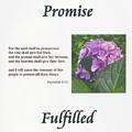 Promise Fulfilled by Dennis Burton