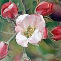 Pommier by Muriel Dolemieux