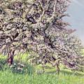 Pommiers Fleuris by Carlos Schwabe