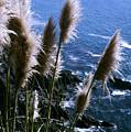 Pompas Grass2 by Gary Brandes