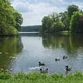 Pond And Ducks by Svetlana Sewell