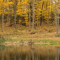 Pond And Woods Autumn 1 by John Brueske