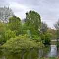 Pond At Buckingham Palace London by Douglas Barnett