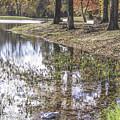Pond Bench Ponderings by Allen Nice-Webb