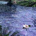 Pond by Cynthia Decker