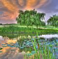 Pond Dreams 4 by Sam Davis Johnson