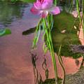 Pond Dreams10 by Sam Davis Johnson