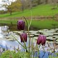 Pond Dwellers by Rosie Knightley
