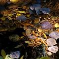pond leaves RIV M 23 by Sierra Dall