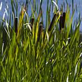 Pond Life by Gary Benson