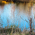 Pond Life by Tracy Welter