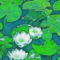 Pond Lily 2 by Pamela Cooper