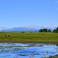 Pond Pasture And  Rocky Mountains by Ed Mosier