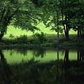 Pond Reflect by Karol Livote