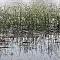 Pond Reflections by Christy Pooschke