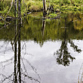 Pond Reflections by Fran Gallogly