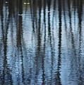 Pond Reflections by Virginia Levasseur