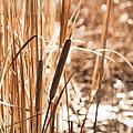 Pond Shimmerings by Leda Robertson