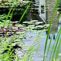 Pond by Soni Macy