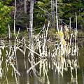 Pond Sticks by Larry Keahey