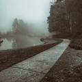 Pond Walk In Black And White by Tom Mc Nemar