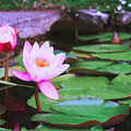 Pond With Water Lilly Flowers by Anastasy Yarmolovich
