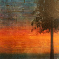 Ponderosa Pine by Patt Nicol