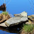Pondside Stone by Steven Scanlon