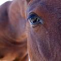 Pony by Dustin K Ryan