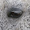 Pony Eye by Sherri Cavalier