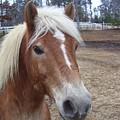 Pony by Kristen Hurley