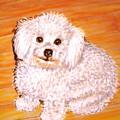 Poodle by Patricia L Davidson