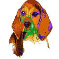 Pookie. Pet Series by Rafael Salazar