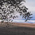 Pools Beach by Sarah Lynch