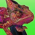 Pop Art Chameleon by L S Keely