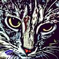Face Of The Feline by David G Paul