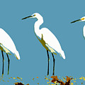Pop Egrets by David Lee Thompson