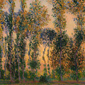 Poplars At Giverny - Sunrise by Mountain Dreams