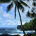 Poponi Ulaino Mokupupu Maui North Shore Hawaii by Sharon Mau