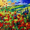 Poppies 78 by Pol Ledent