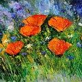 Poppies 79 by Pol Ledent