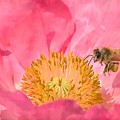 Poppies And Bumble Bee by Jeelan Clark