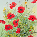 Poppies And Mayweed by John Gubbins