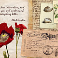 Poppies And Postcards by Samitha Edwards