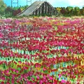 Poppies At Cedar Point by James H Phillips